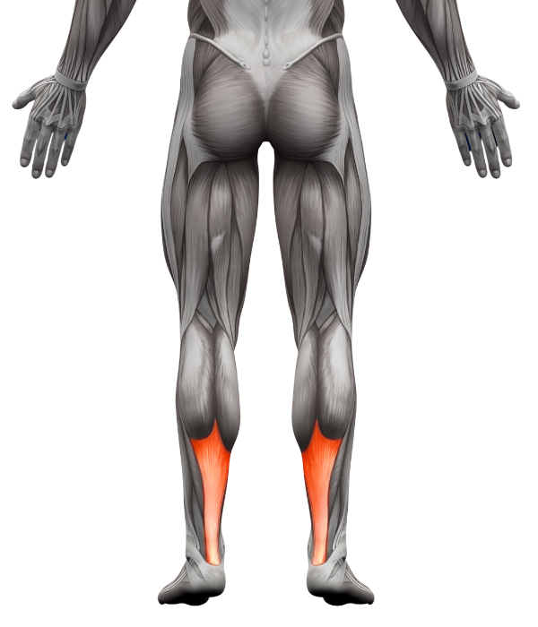 Achilles Treatment in Fort Myers, FL